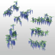 wisteria 05 3d model