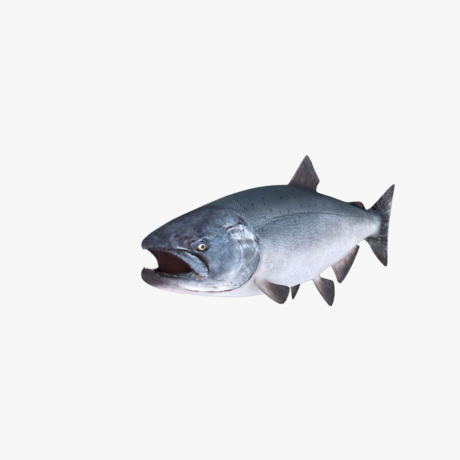 salmone royalty-free 3d model - Preview no. 2