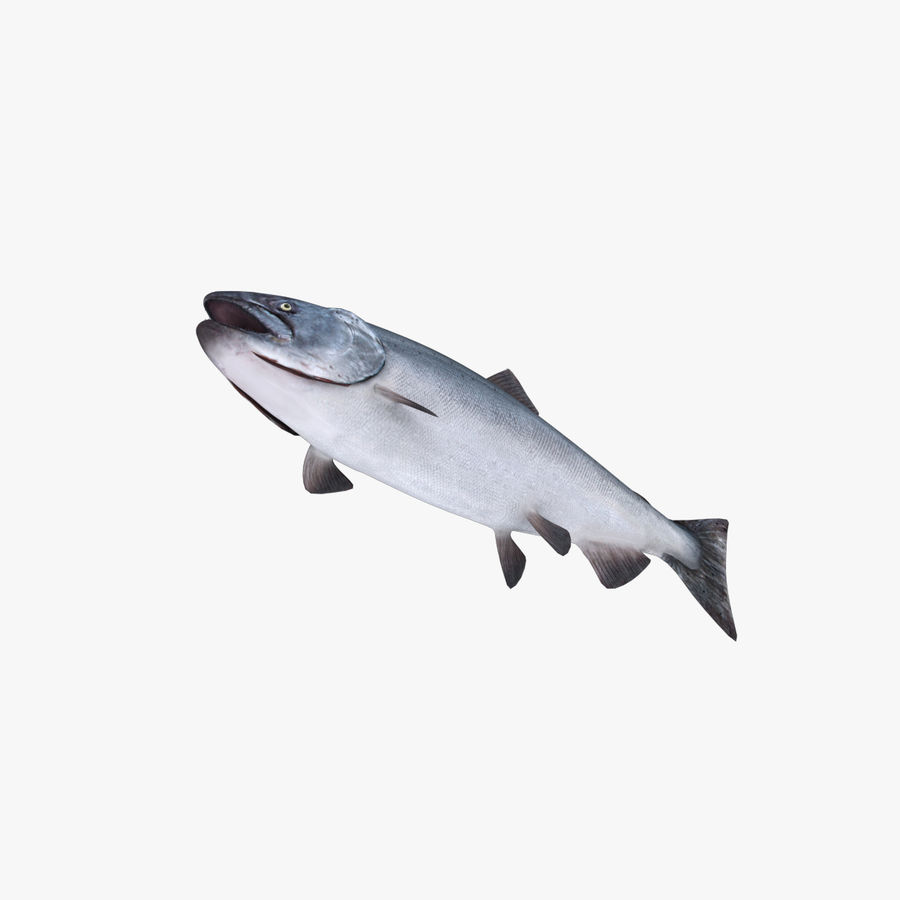salmone royalty-free 3d model - Preview no. 4