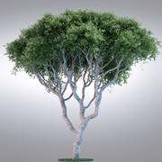 HI Realistic Series Tree - 016 3d model
