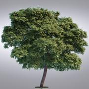HI Realista Série Árvore - 014 3d model