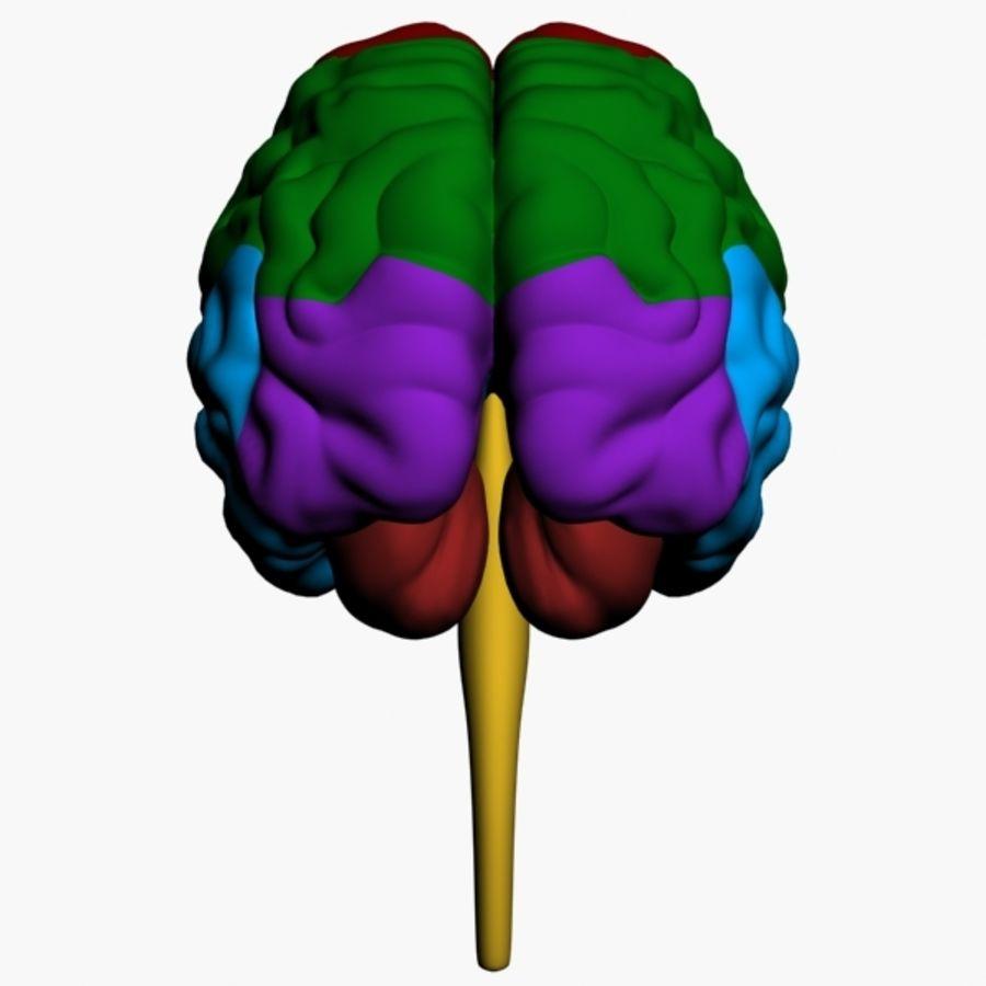 İnsan beyni royalty-free 3d model - Preview no. 5