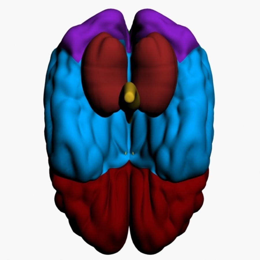 İnsan beyni royalty-free 3d model - Preview no. 9