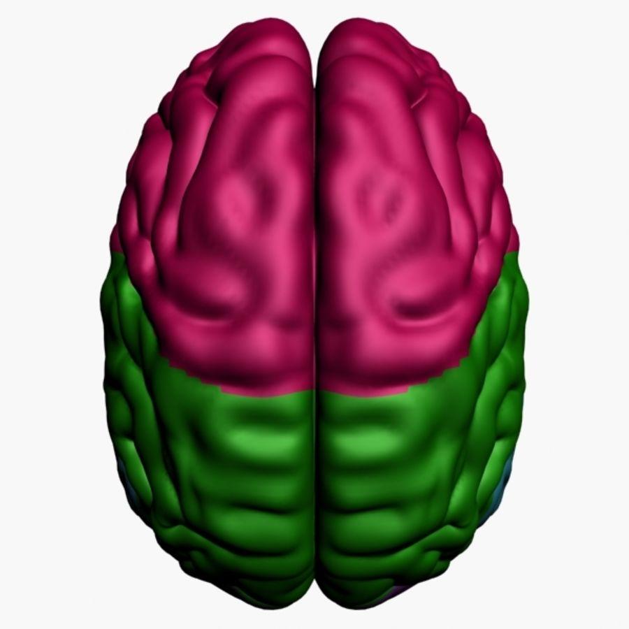 İnsan beyni royalty-free 3d model - Preview no. 11