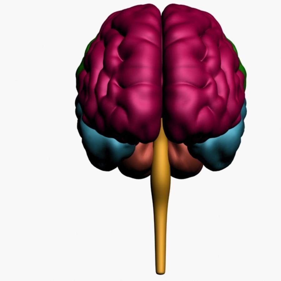 İnsan beyni royalty-free 3d model - Preview no. 7