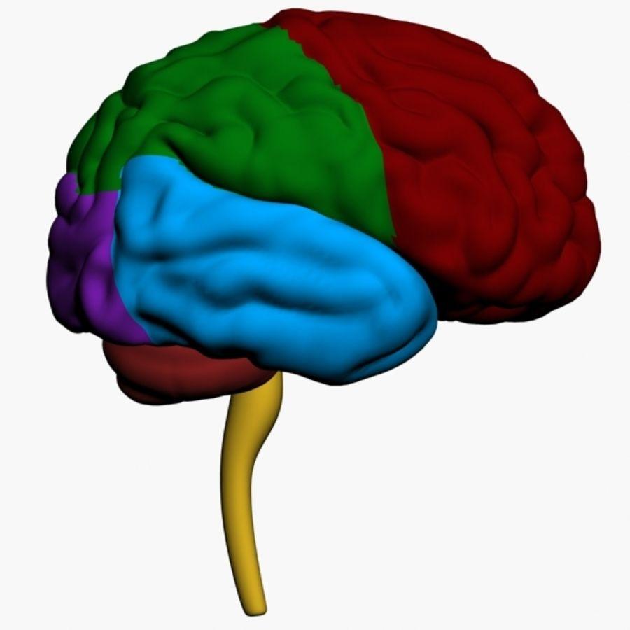 İnsan beyni royalty-free 3d model - Preview no. 6