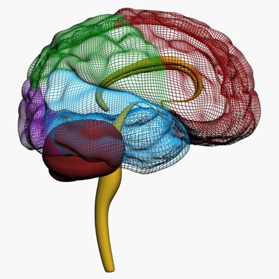İnsan beyni royalty-free 3d model - Preview no. 1