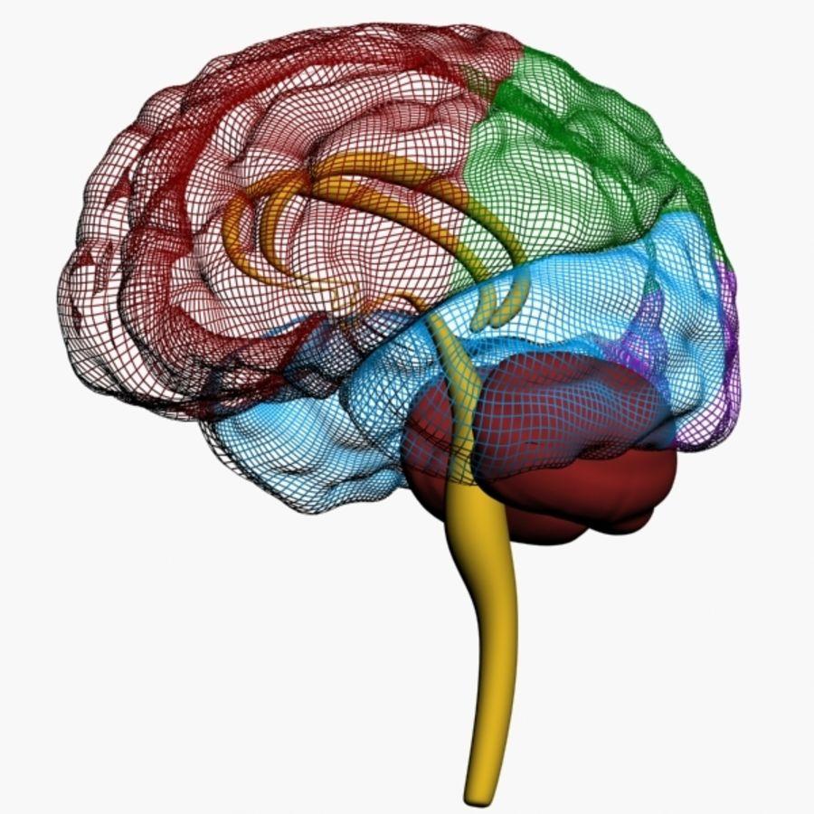 İnsan beyni royalty-free 3d model - Preview no. 12