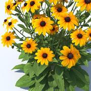 Black-Eyed Susan Perennial Flower Mix 3d model