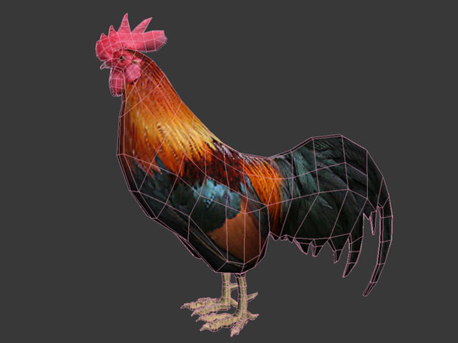 Rooster royalty-free 3d model - Preview no. 6