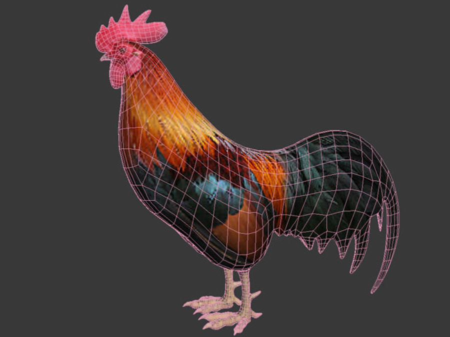 Rooster royalty-free 3d model - Preview no. 5