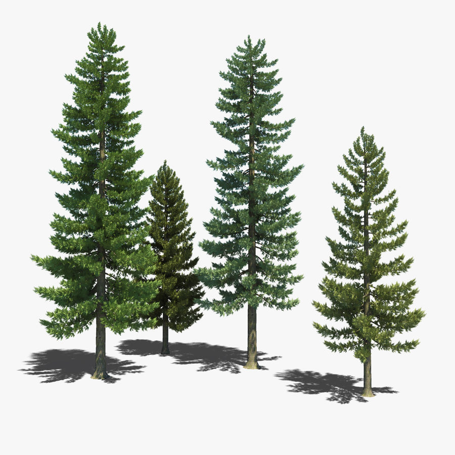 Pine Trees royalty-free 3d model - Preview no. 1
