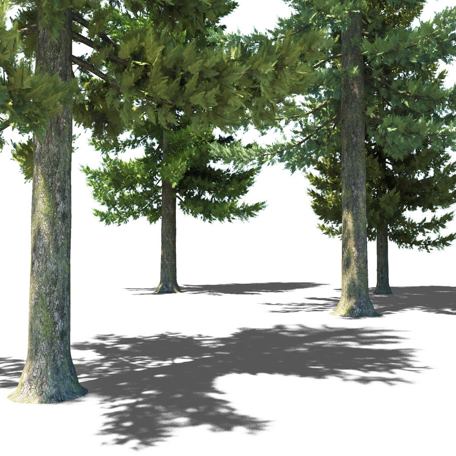 Pine Trees royalty-free 3d model - Preview no. 16