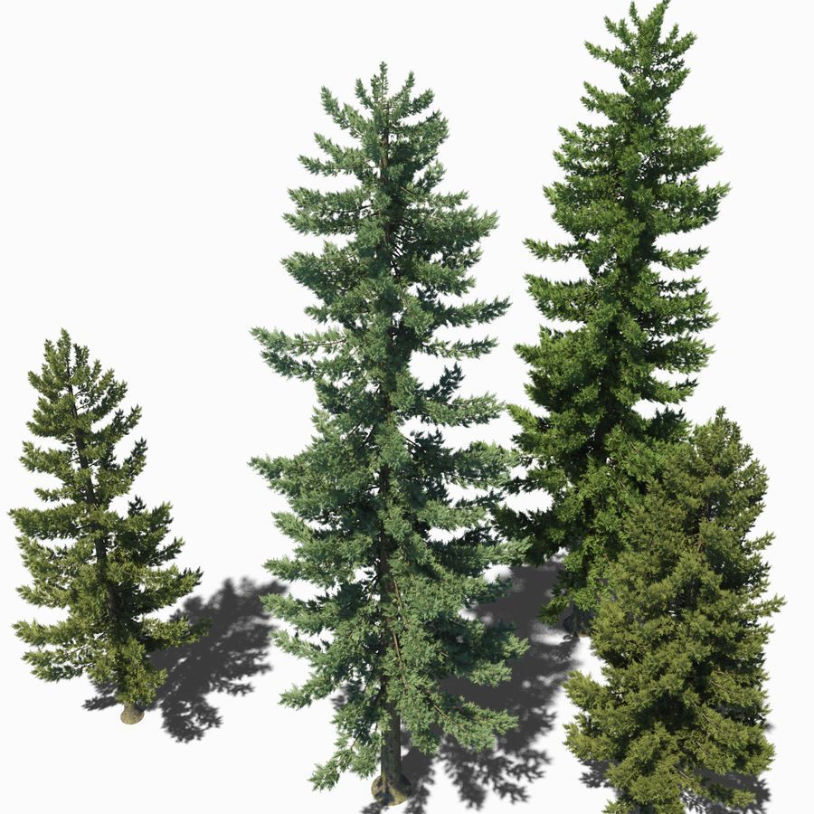 Pine Trees royalty-free 3d model - Preview no. 12