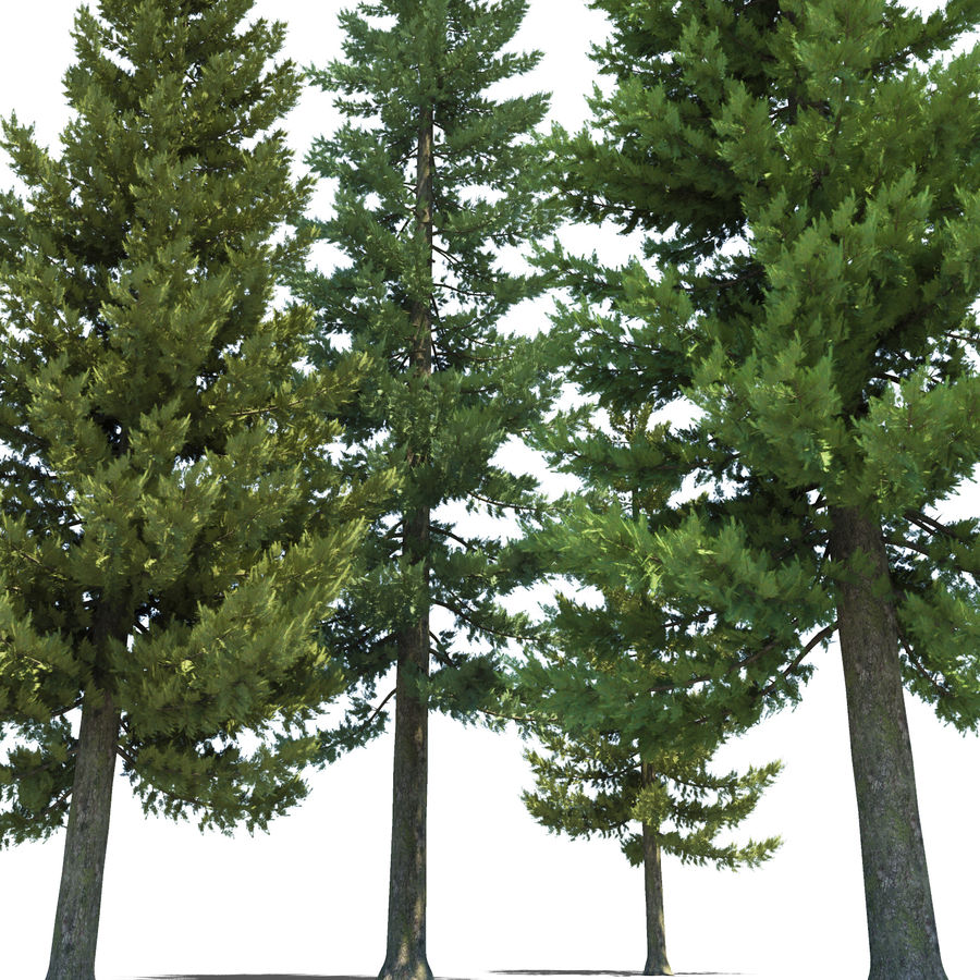 Pine Trees royalty-free 3d model - Preview no. 10