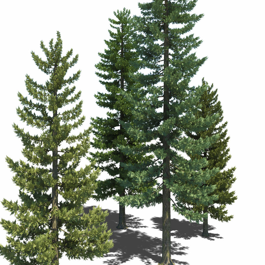 Pine Trees royalty-free 3d model - Preview no. 6