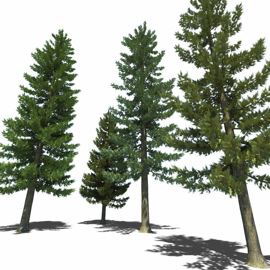 Pine Trees royalty-free 3d model - Preview no. 4