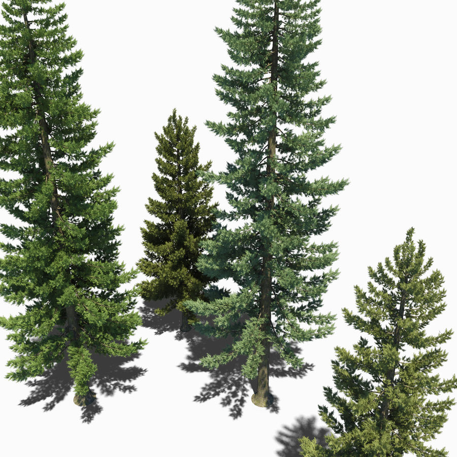 Pine Trees royalty-free 3d model - Preview no. 8