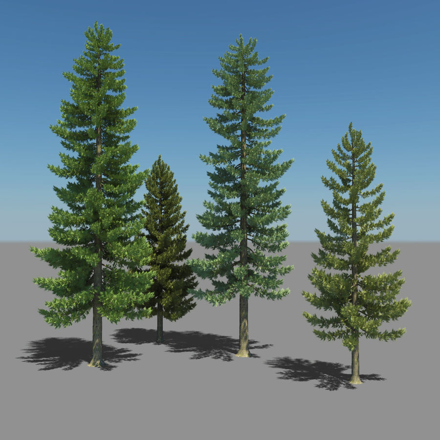 Pine Trees royalty-free 3d model - Preview no. 2