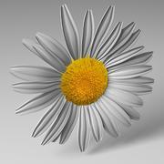 Daisy 3d model