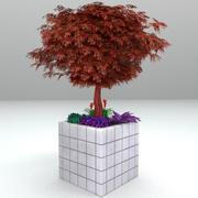 젊은 벽돌 화분 일본 단풍 나무 3d model