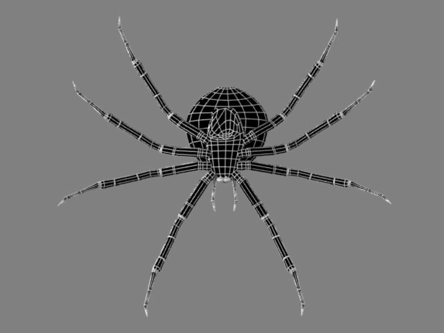 Shamrock Spider royalty-free 3d model - Preview no. 3