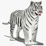 Amur de tigre (branco) 3d model