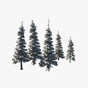 云杉树 3d model