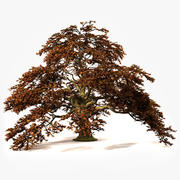 秋の木 3d model