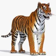 虎 3d model