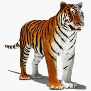 Tiger (weiß und natürlich) 3d model