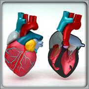 Anatomía del corazón modelo 3d