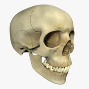 人类的头骨 3d model