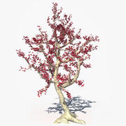 Red Flower Tree 3d model