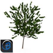 arbre3 3d model