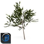 arbre4 3d model