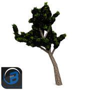 arbre 6 3d model
