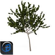 arbre7 3d model