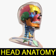 Female Head Anatomy Ver.1 3d model