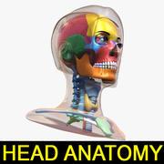 Kadın Baş Anatomisi Ver.1 3d model