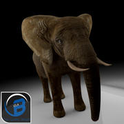 Afrikanischer Elefant 3d model