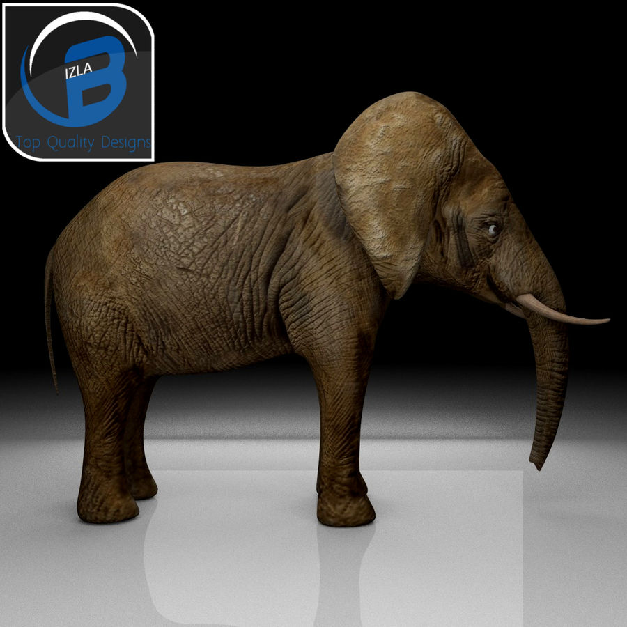 African Elephant royalty-free 3d model - Preview no. 2