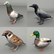 Pakiet ptaków miejskich 3d model