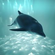 Delfin 3d model