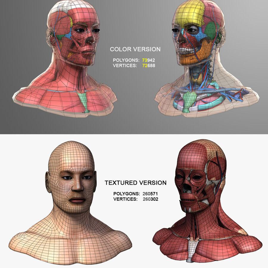 Anatomie complète de la tête masculine royalty-free 3d model - Preview no. 17
