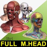 完全な男性の頭の解剖学 3d model
