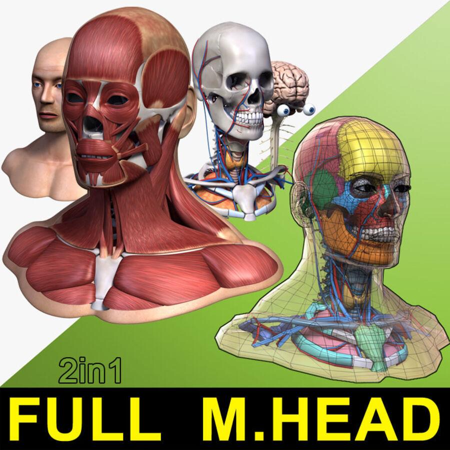 Anatomie complète de la tête masculine royalty-free 3d model - Preview no. 1