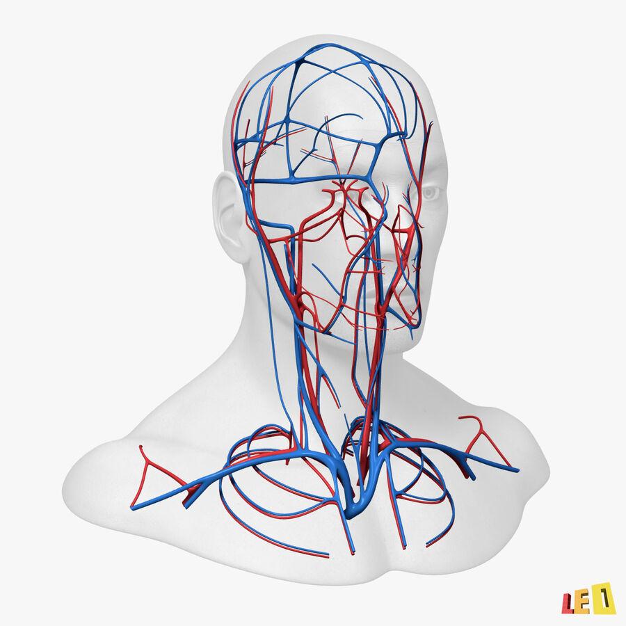 Anatomie complète de la tête masculine royalty-free 3d model - Preview no. 8