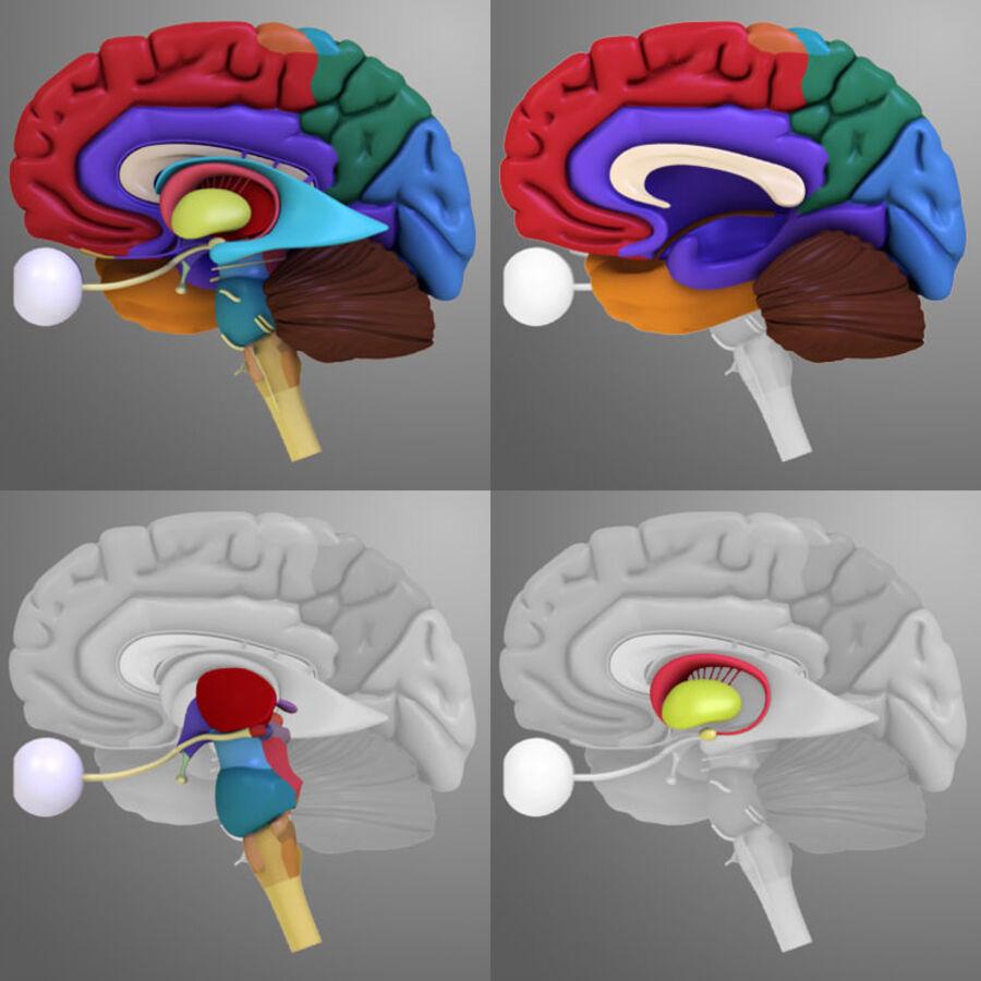 Anatomie complète de la tête masculine royalty-free 3d model - Preview no. 33