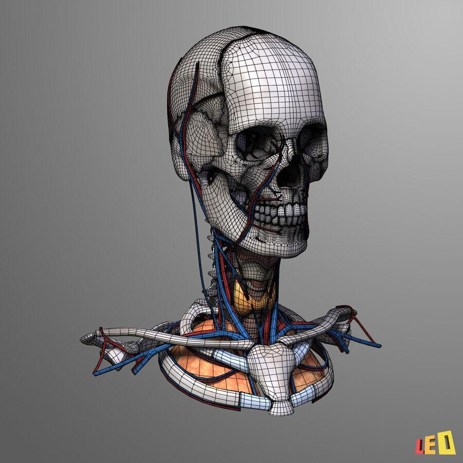 Anatomie complète de la tête masculine royalty-free 3d model - Preview no. 10